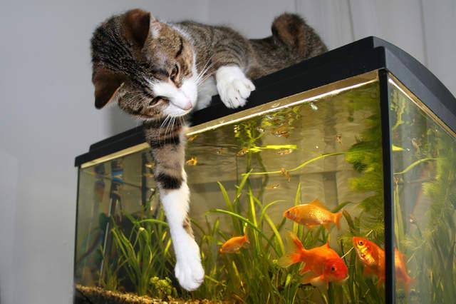 猫与水族箱的奇葩照片 喵星人与蜥蜴一起睡觉